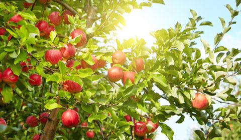Fruit Tree Planting Guide