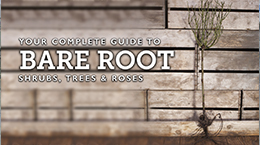 How to plant bare Root plants and trees