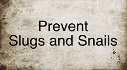 Prevent Slugs and Snail